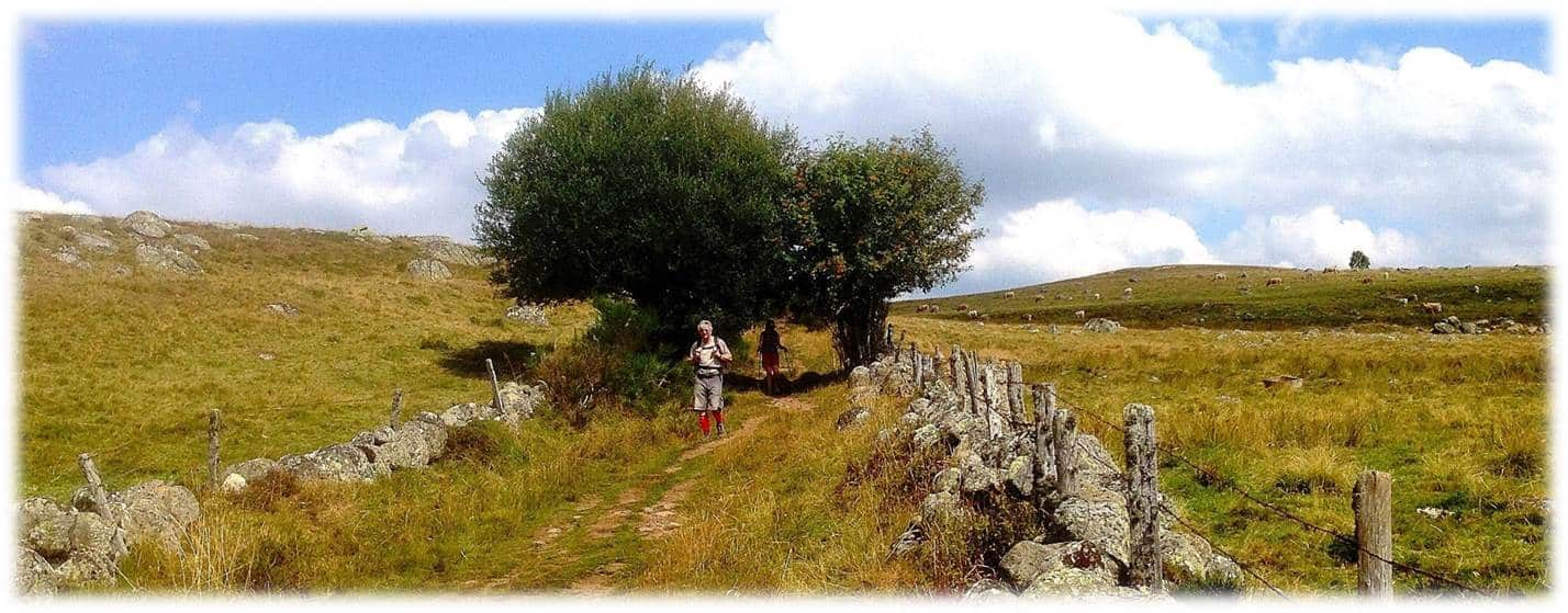 Walking Holidays In France's St James Way