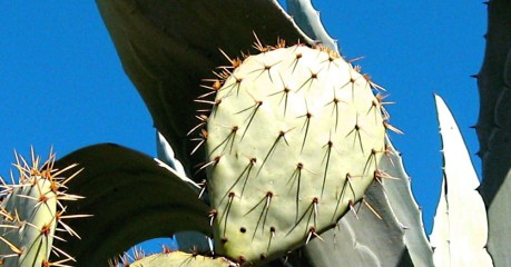 Self-Guided Walking Tours In France:trails Of The French Garrigues - Fine Cactus