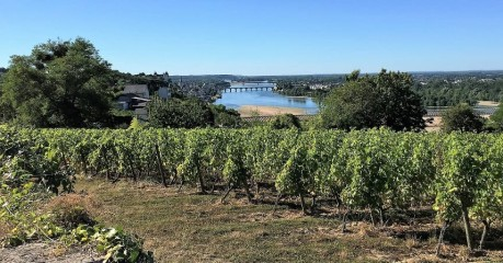Loire river and vineyards near Saumur - Hiking the Loire Valley GR3 trail