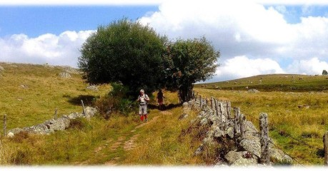 Walking in France across the Aubrac plateau